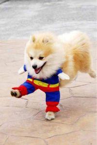 superdogalt
